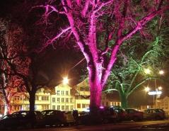 Árvores bioluminescentes, tecnologia desenvolvida por pesquisadores taiwaneses através de algas marinhas e nanopartículas.